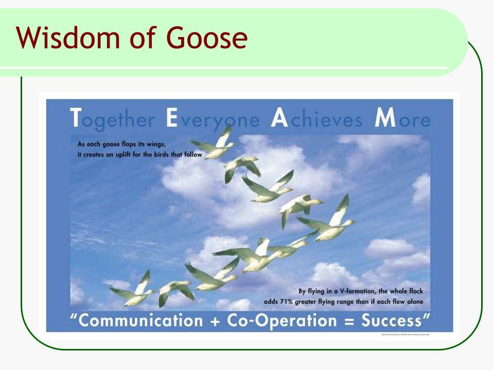 Wisdom of Goose