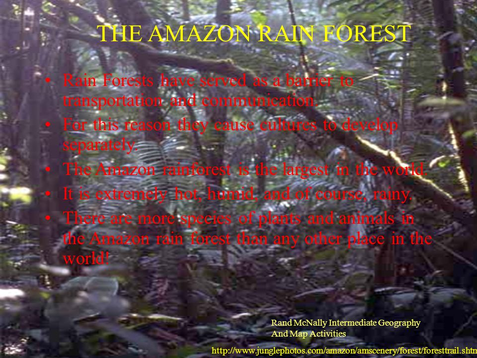 THE AMAZON RAIN FOREST Rain Forests have served as a barrier to transportation and communication.