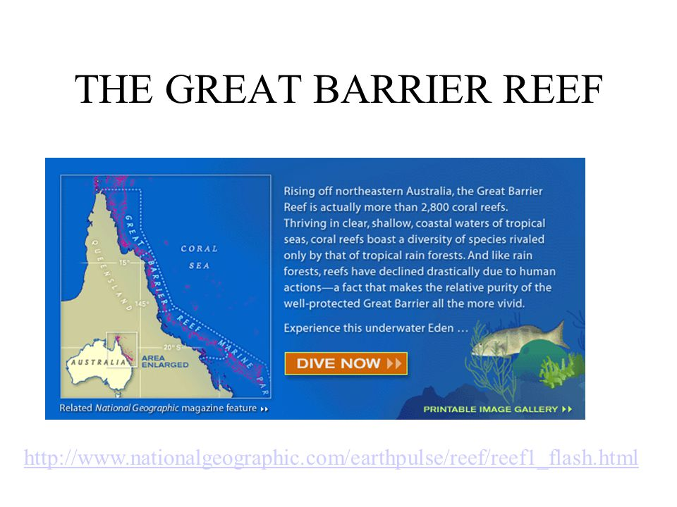 THE GREAT BARRIER REEF http://www.nationalgeographic.com/earthpulse/reef/reef1_flash.html