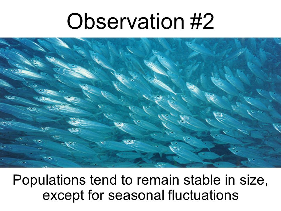 Observation #1 All Species have such great potential fertility that their population size would increase exponentially if all individuals that are born reproduce successfully.