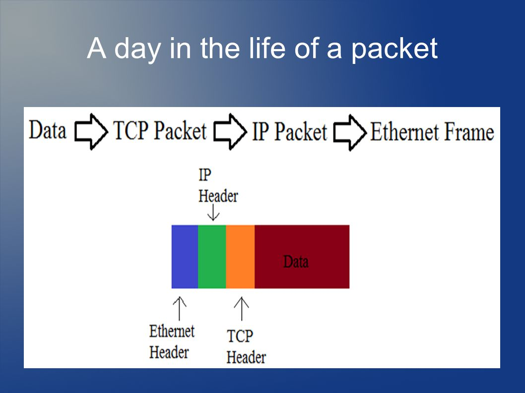 A day in the life of a packet