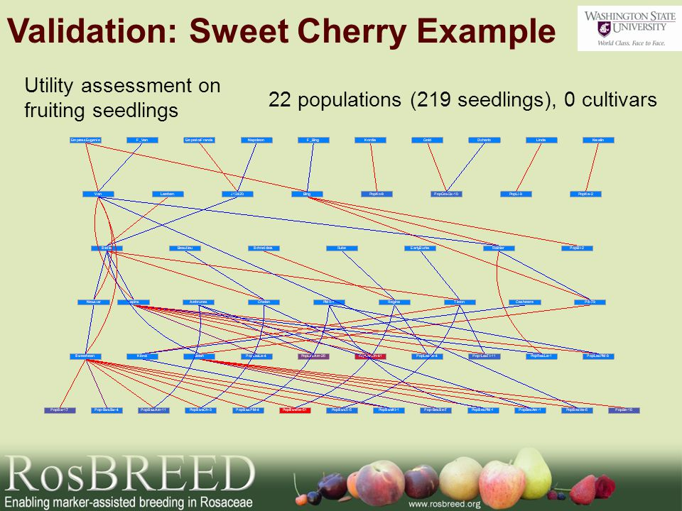 Utility assessment on fruiting seedlings 22 populations (219 seedlings), 0 cultivars Validation: Sweet Cherry Example
