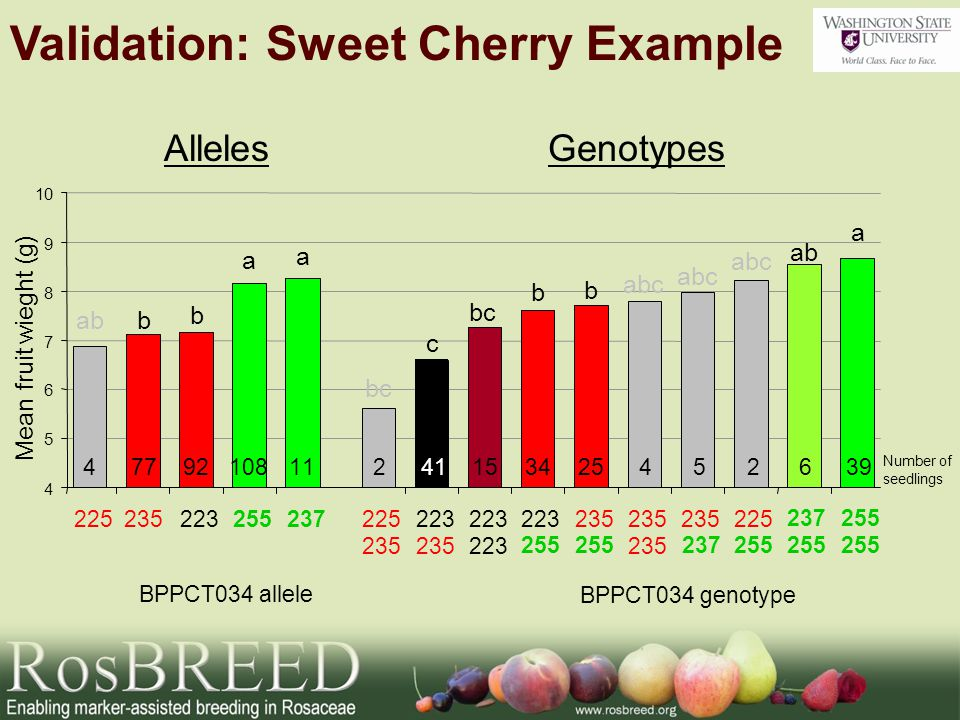 Genotypes Mean fruit wieght (g) a a b bab BPPCT034 allele a ab abc b b bc c BPPCT034 genotype Number of seedlings Alleles Validation: Sweet Cherry Example