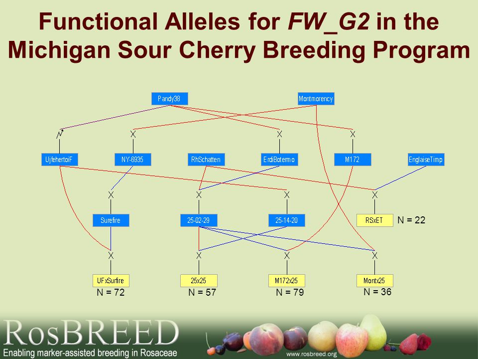 Functional Alleles for FW_G2 in the Michigan Sour Cherry Breeding Program N = 72N = 57N = 79 N = 36 N = 22