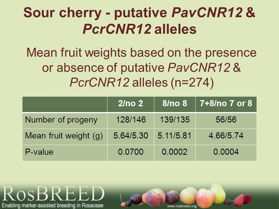 Sour cherry - putative PavCNR12 & PcrCNR12 alleles 2/no 28/no 87+8/no 7 or 8 Number of progeny128/146139/13556/56 Mean fruit weight (g)5.64/ / /5.74 P-value Mean fruit weights based on the presence or absence of putative PavCNR12 & PcrCNR12 alleles (n=274)