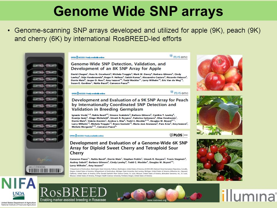 Genome-scanning SNP arrays developed and utilized for apple (9K), peach (9K) and cherry (6K) by international RosBREED-led efforts Genome Wide SNP arrays