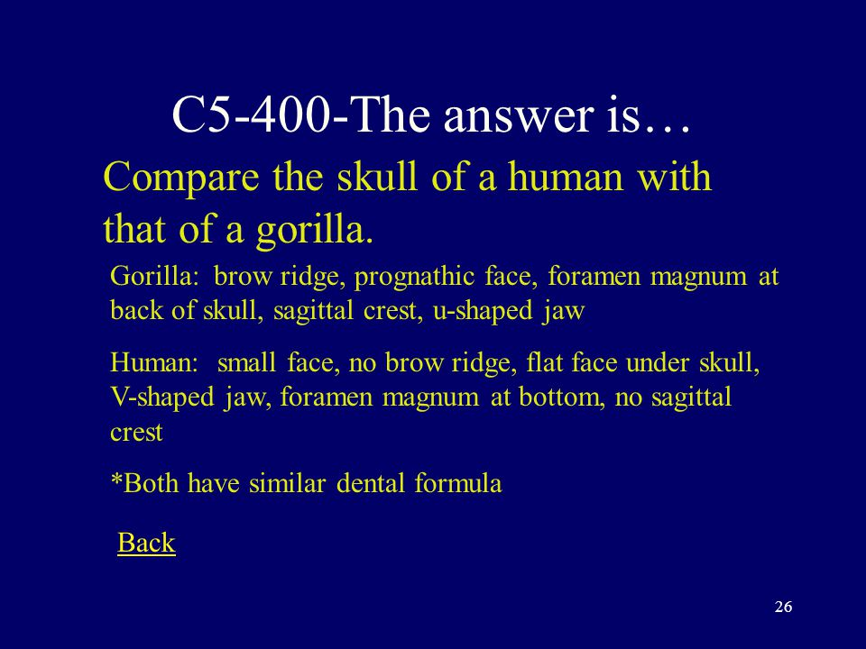 25 C5-300-The answer is… When it comes to hominids, what is the relationship between body size and brain size.