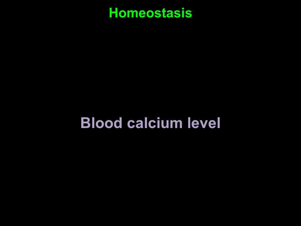 Homeostasis Blood calcium level