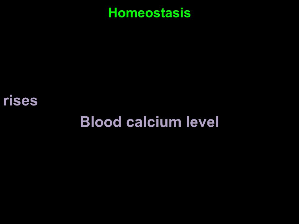 Homeostasis rises Blood calcium level