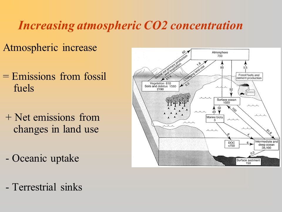 Increasing atmospheric CO2 concentration Atmospheric increase = Emissions from fossil fuels + Net emissions from changes in land use - Oceanic uptake - Terrestrial sinks