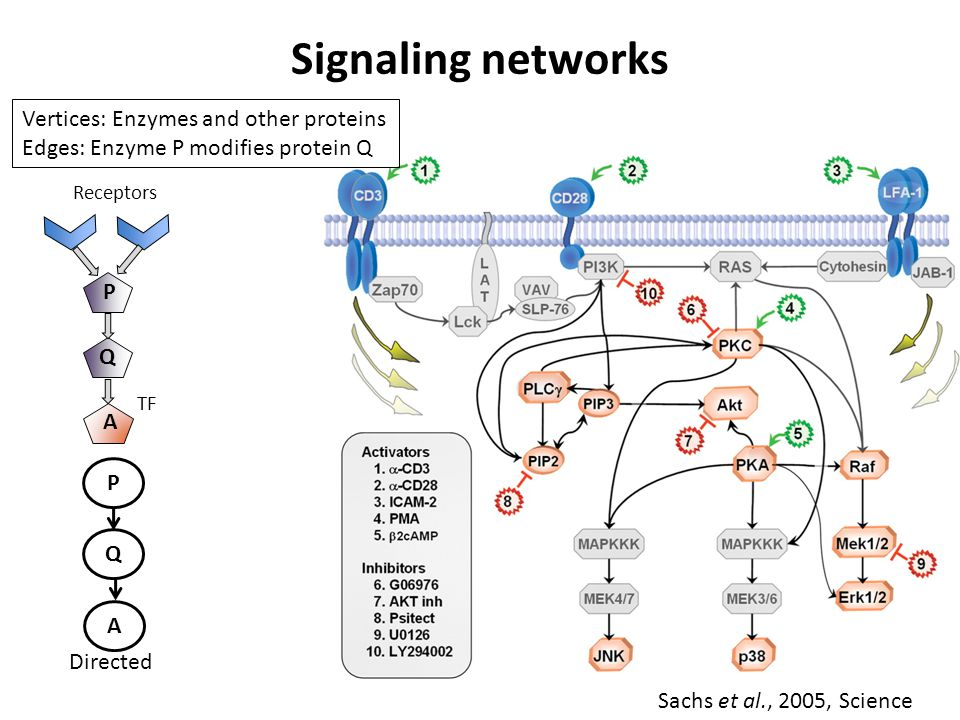 Signaling networks Sachs et al., 2005, Science Receptors P Q A TF A P Q Directed Vertices: Enzymes and other proteins Edges: Enzyme P modifies protein Q