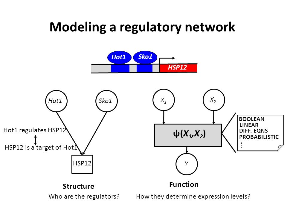 Modeling a regulatory network HSP12 Sko1 Hot1 Sko1 Structure HSP12 Hot1 Who are the regulators.