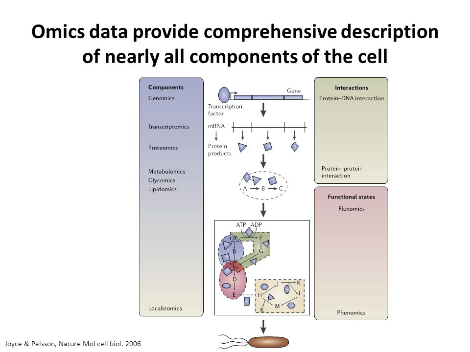 Omics data provide comprehensive description of nearly all components of the cell Joyce & Palsson, Nature Mol cell biol.