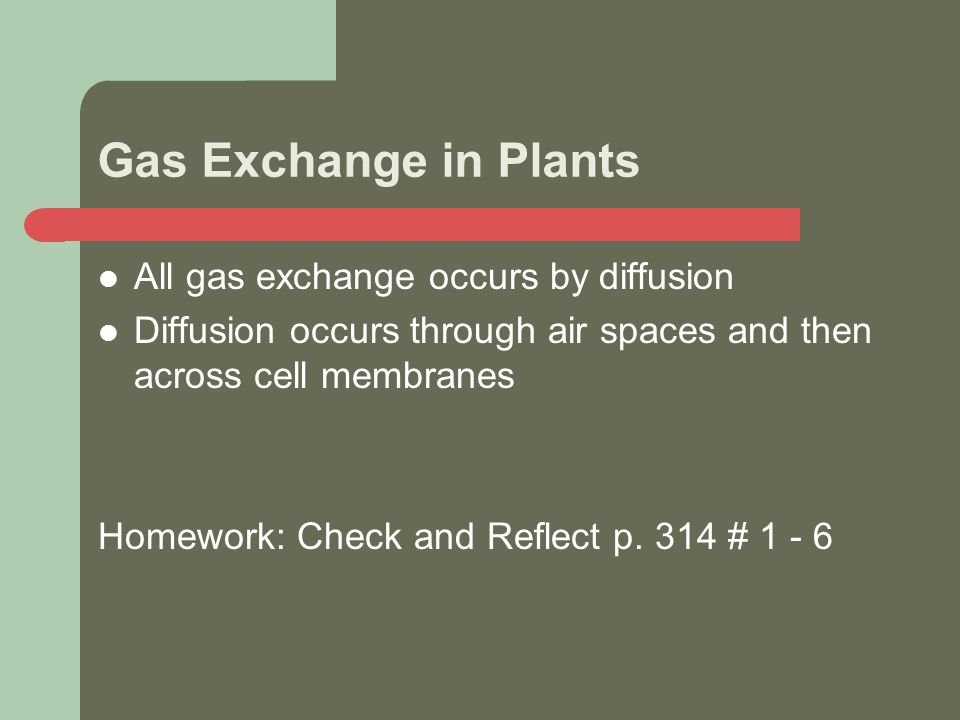 Gas Exchange in Plants All gas exchange occurs by diffusion Diffusion occurs through air spaces and then across cell membranes Homework: Check and Reflect p.