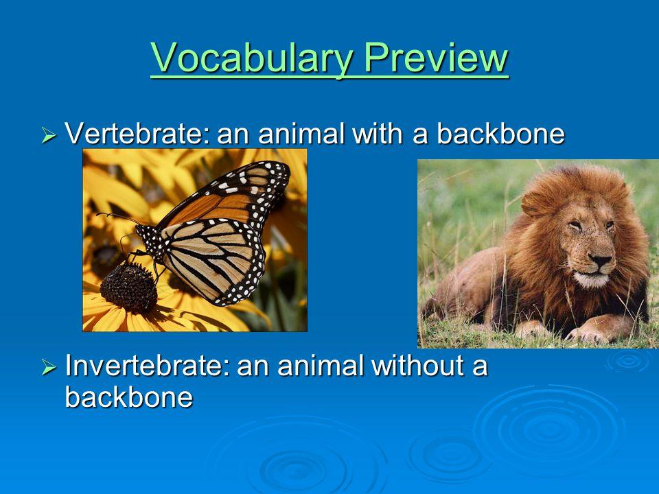 Vocabulary Preview Voc...