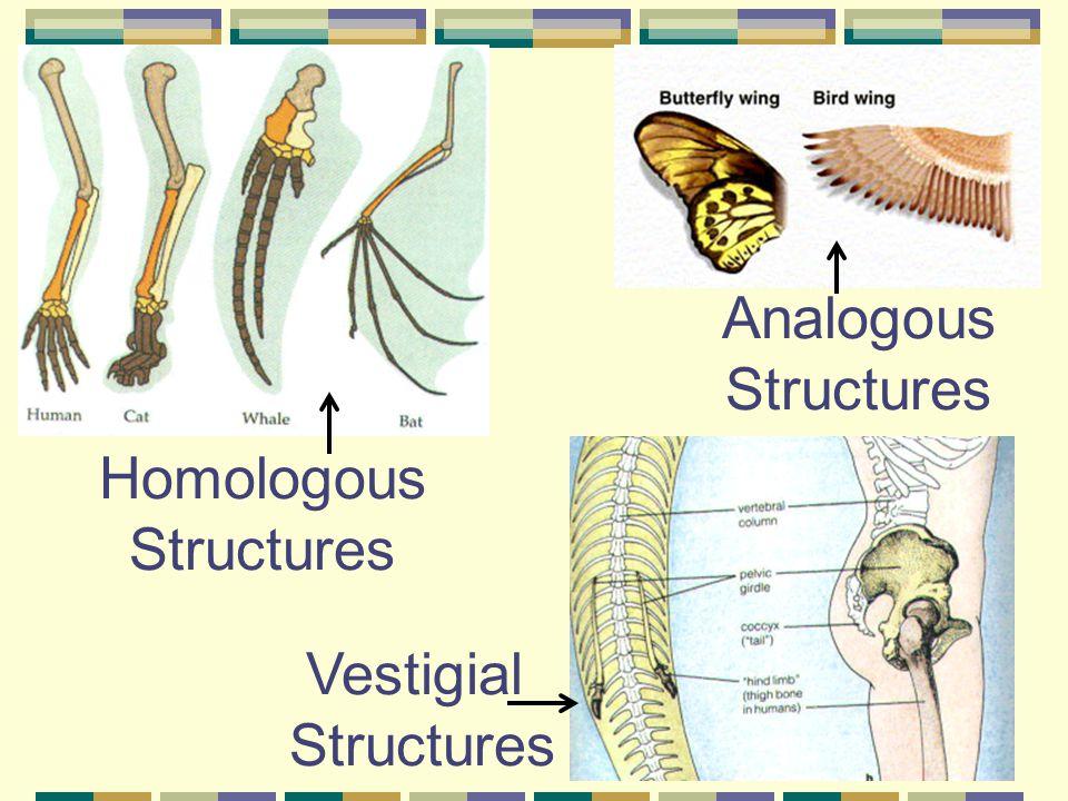 Homologous Structures Vestigial Structures Analogous Structures