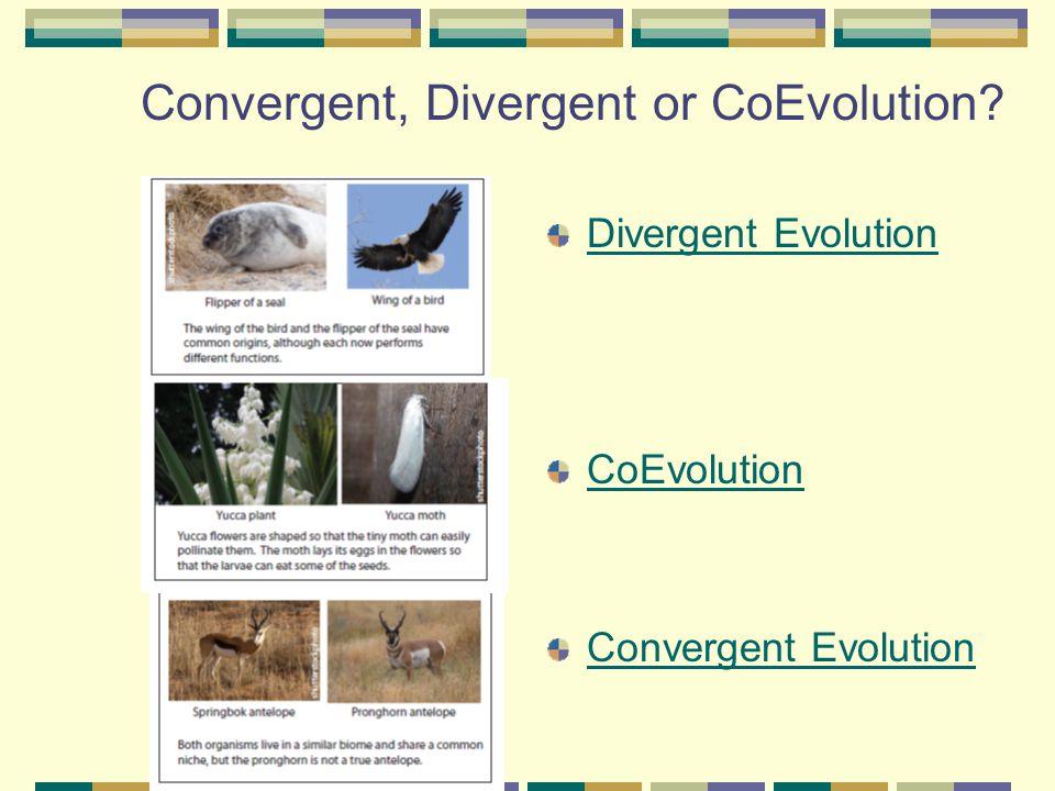 Convergent, Divergent or CoEvolution? Divergent Evolution CoEvolution Convergent Evolution