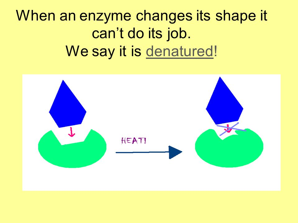 Changes in pH can also change an enzyme's shape