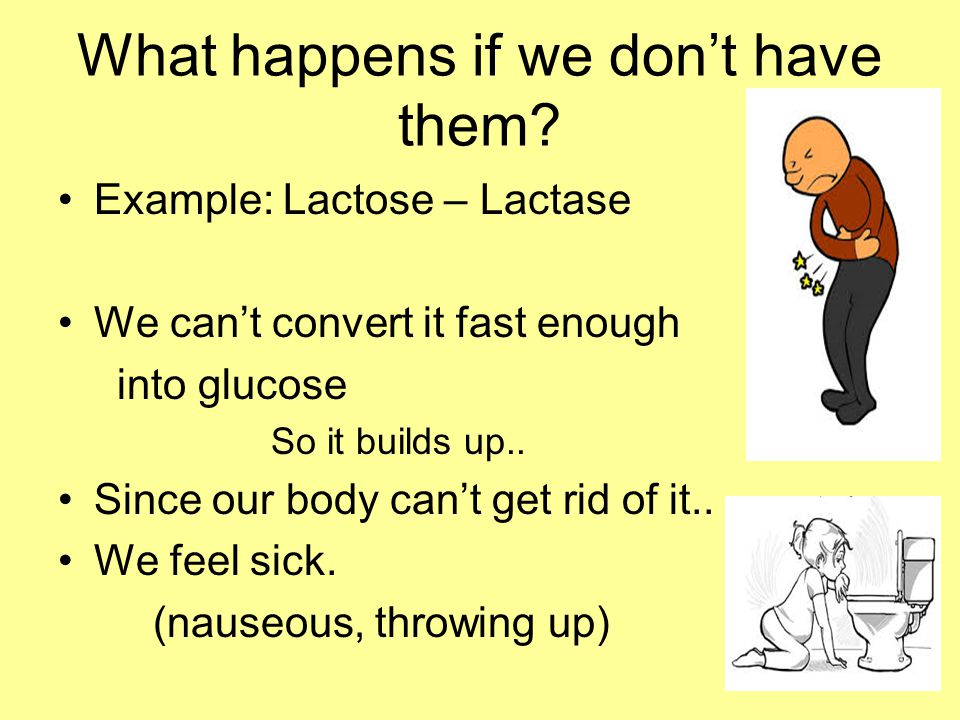 Lactase is just one enzyme that breaks down lactose but there are many different enzymes at work in your body.