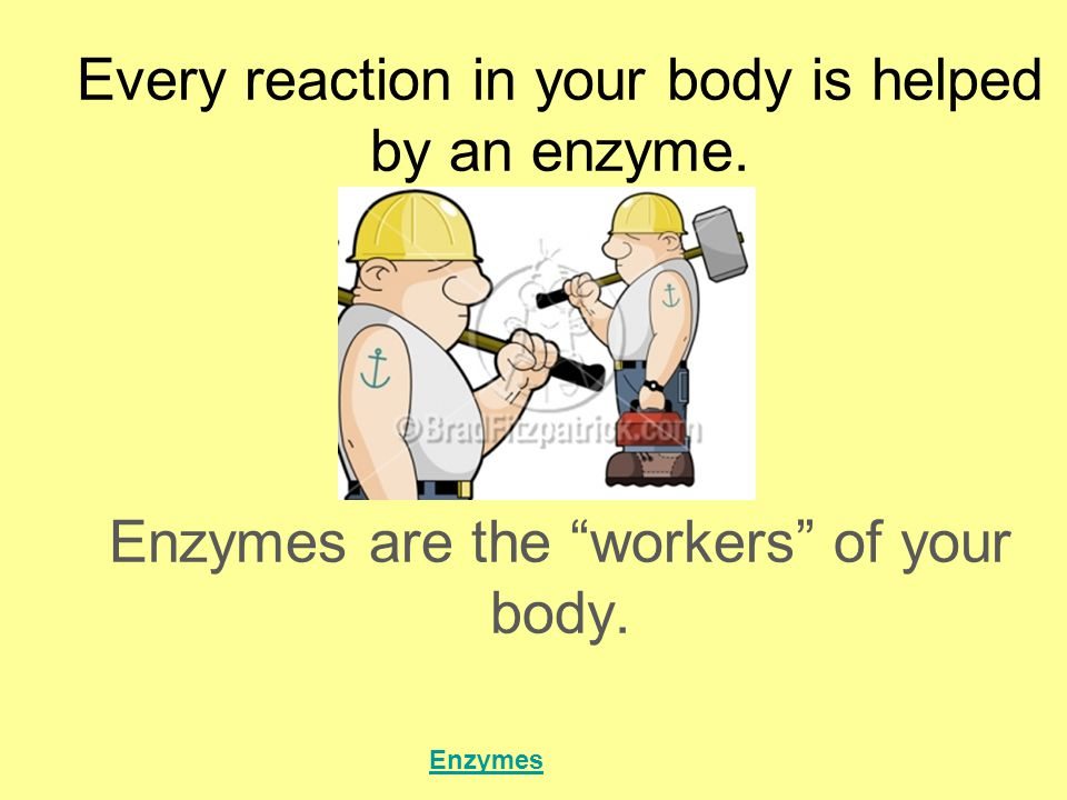 AMYLASE: breaks down starch in your mouth and stomach LIPASE: breaks down fats PEPSIN: breaks down proteins