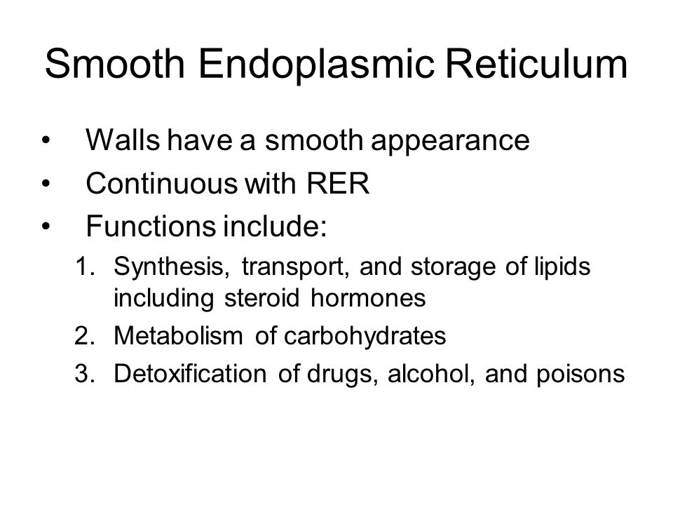 Smooth Endoplasmic Reticulum Walls have a smooth appearance Continuous with RER Functions include: 1.Synthesis, transport, and storage of lipids including steroid hormones 2.Metabolism of carbohydrates 3.Detoxification of drugs, alcohol, and poisons
