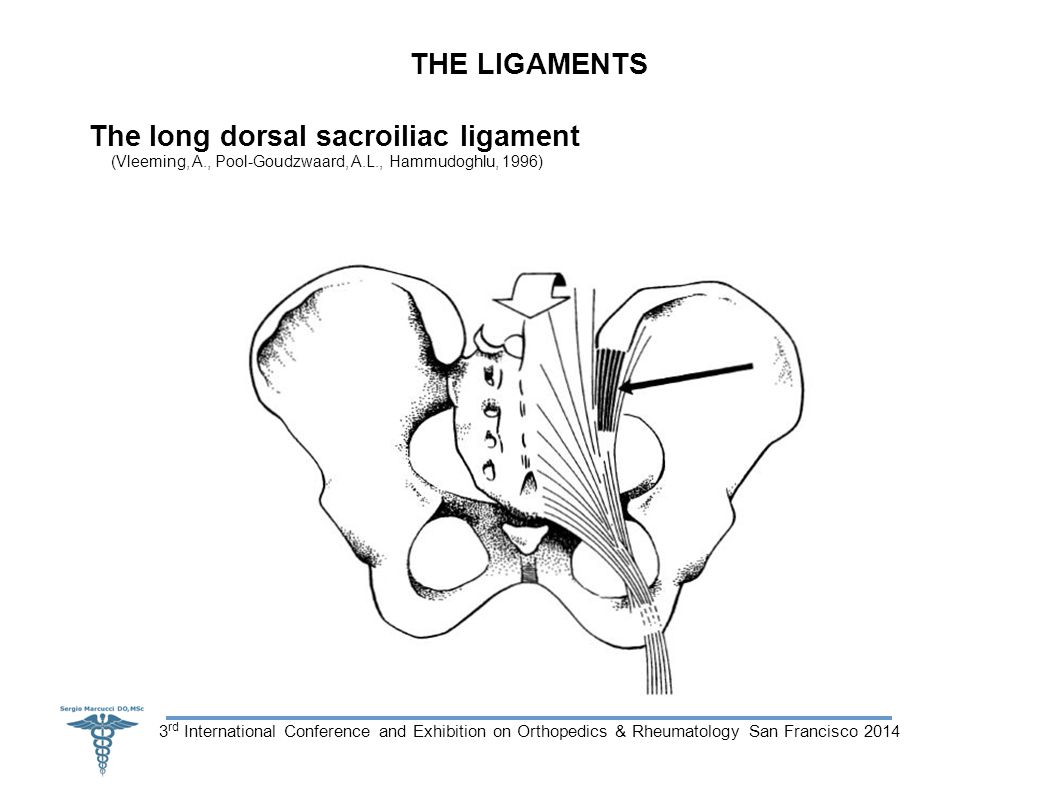 3 rd International Conference and Exhibition on Orthopedics & Rheumatology San Francisco 2014 THE LIGAMENTS The long dorsal sacroiliac ligament (Vleeming, A., Pool-Goudzwaard, A.L., Hammudoghlu, 1996)