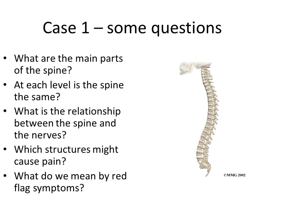 Case 1 – some questions What are the main parts of the spine.