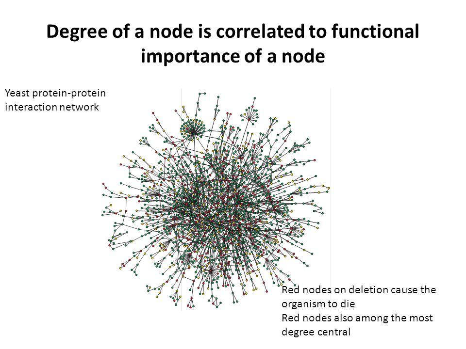 Degree of a node is correlated to functional importance of a node Red nodes on deletion cause the organism to die Red nodes also among the most degree central Yeast protein-protein interaction network