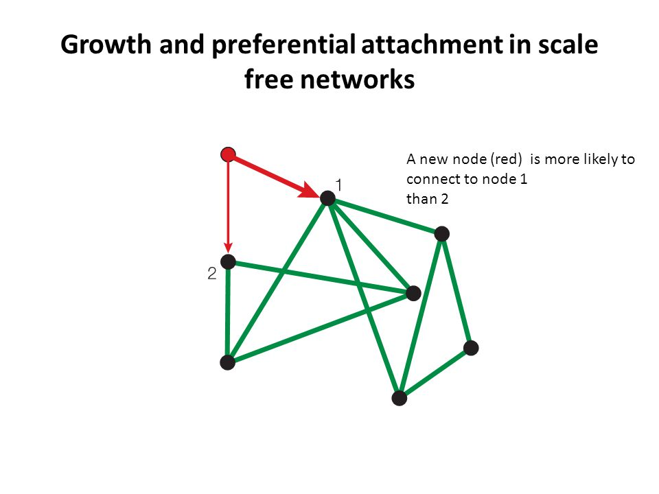 Growth and preferential attachment in scale free networks A new node (red) is more likely to connect to node 1 than 2