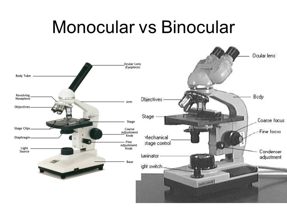 Printables The Compound Microscope Worksheet aim how do the parts of compound light microscope work simple vs microscope
