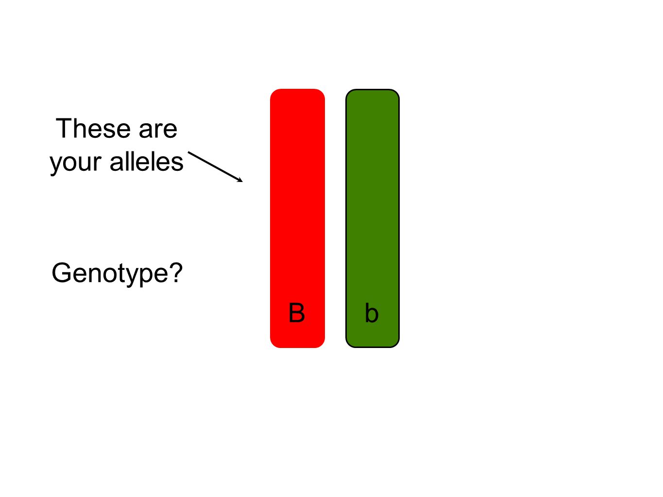 These are your alleles Genotype Bb