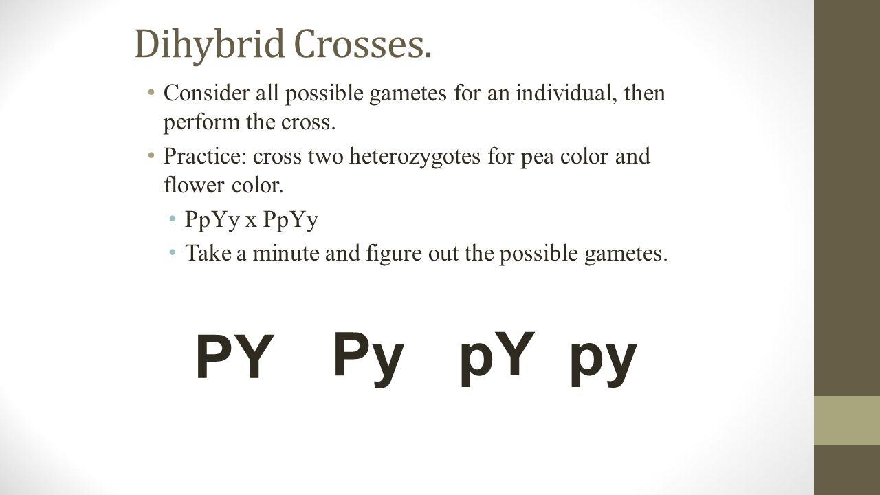 Genetics practice problems worksheet dihybrid