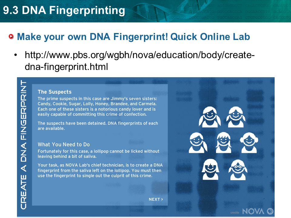 dna fingerprint lab The preparation and conduct of the dna fingerprinting laboratory is divided into the following sections: after the dna is loaded into the gel by the students.