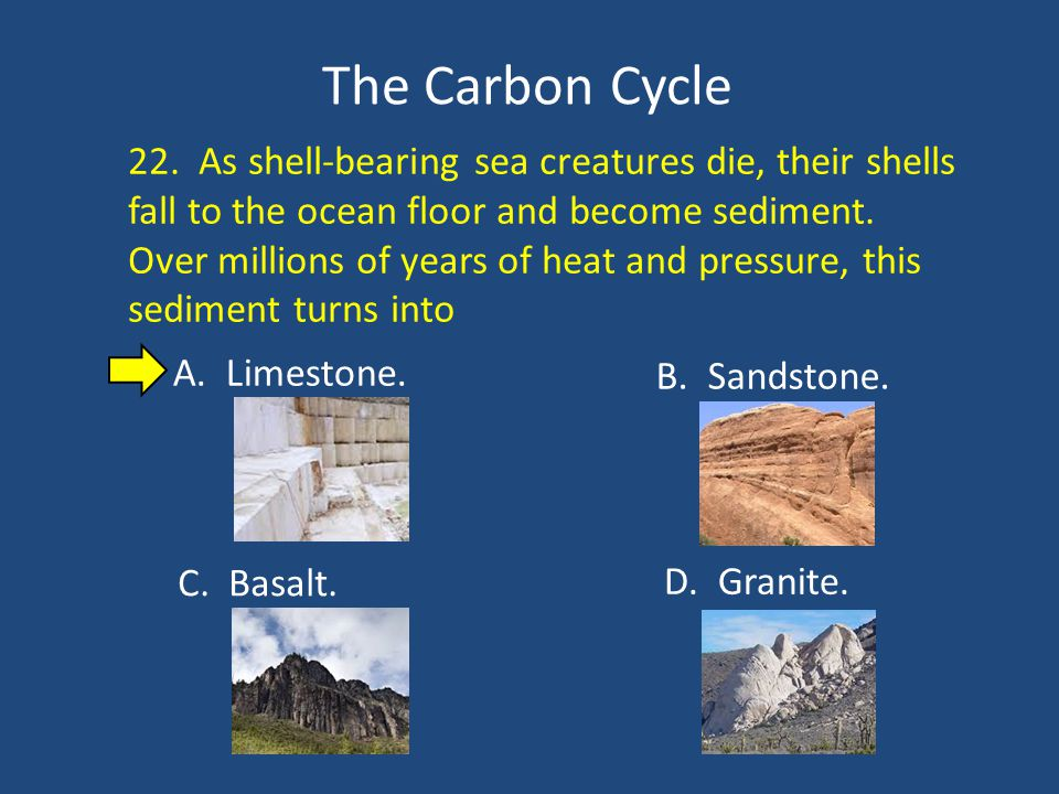 The Carbon Cycle 22.
