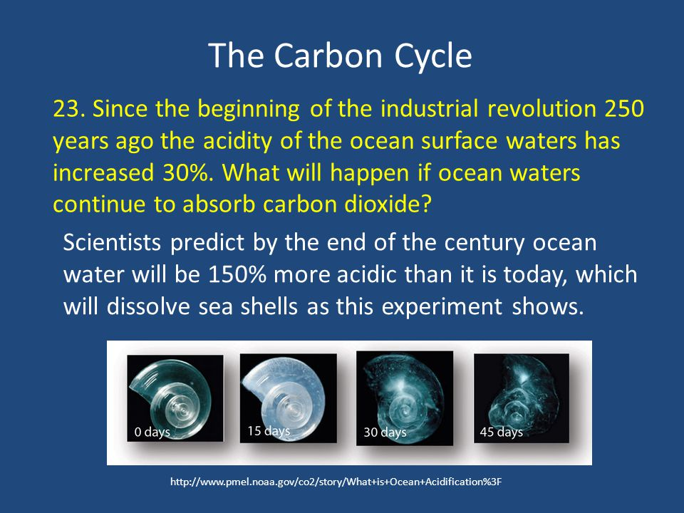 The Carbon Cycle 23.