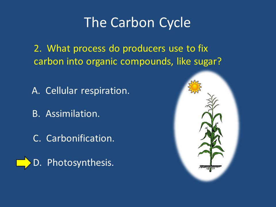 The Carbon Cycle 2. What process do producers use to fix carbon into organic compounds, like sugar.