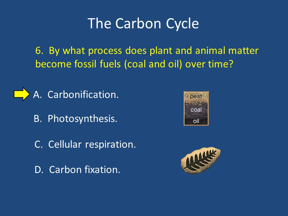 The Carbon Cycle 6.