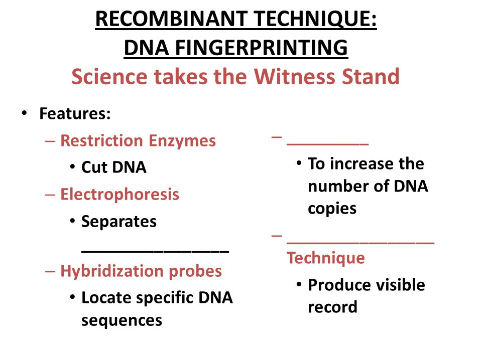 RECOMBINANT TECHNIQUE: DNA FINGERPRINTING Science takes the Witness Stand Features: – Restriction Enzymes Cut DNA – Electrophoresis Separates ________________ – Hybridization probes Locate specific DNA sequences – _________ To increase the number of DNA copies – ________________ Technique Produce visible record