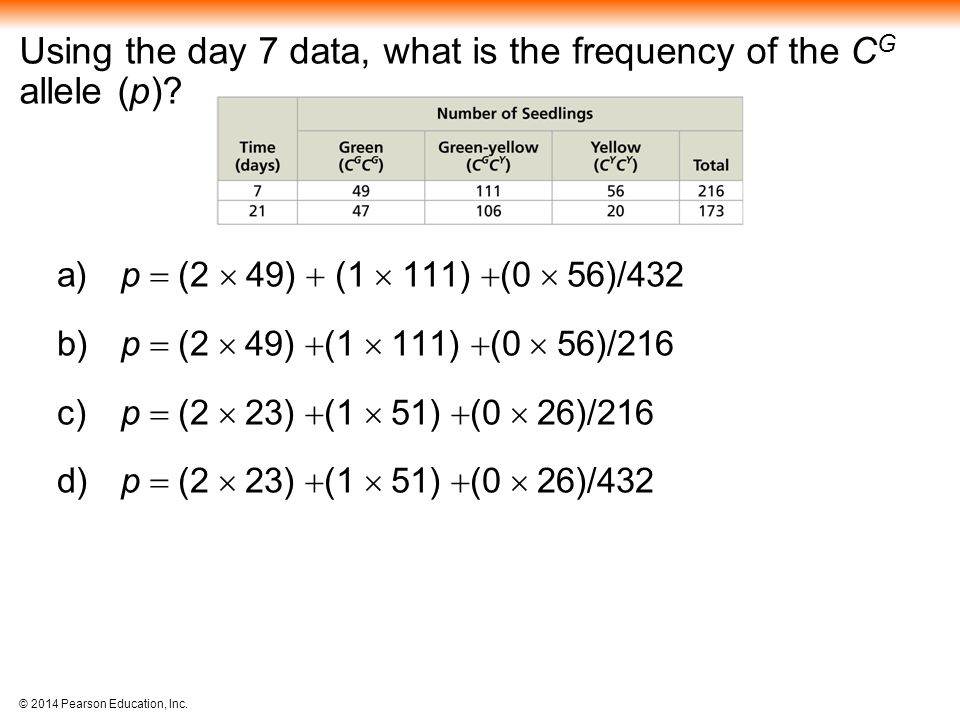 © 2014 Pearson Education, Inc.Using the day 7 data, what is the frequency of the C G allele (p).