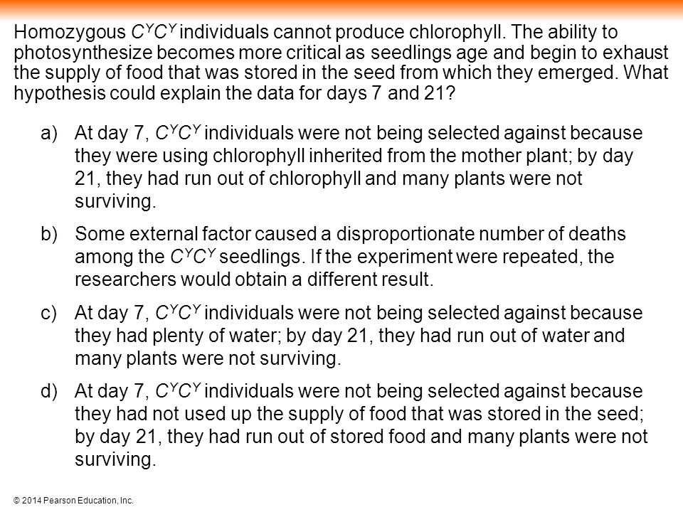 © 2014 Pearson Education, Inc.Homozygous C Y C Y individuals cannot produce chlorophyll.