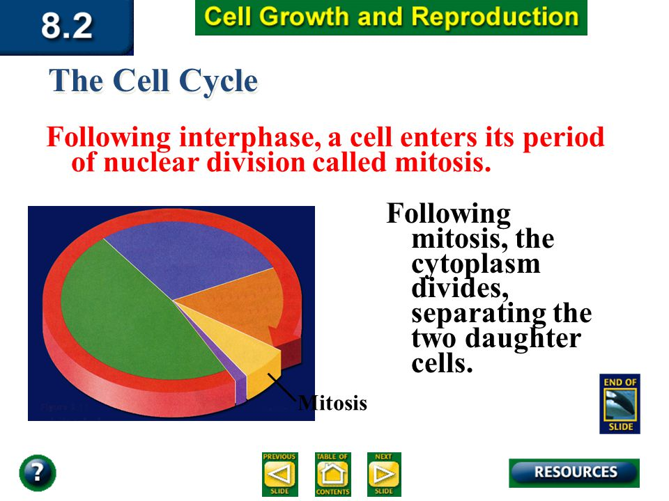 Section 8.2 Summary – pages The Cell Cycle Following interphase, a cell enters its period of nuclear division called mitosis.