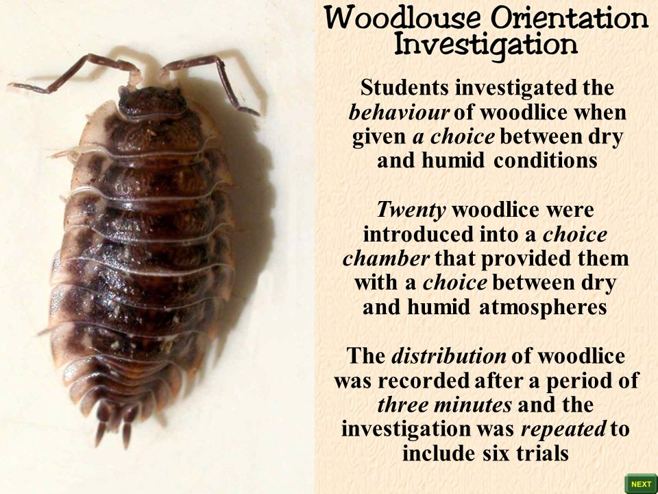 woodlice choice chamber Taxis and kinesis introduces taxis and kinesis responses in flatworms/woodlice/maggots i assume that students will have done the choice chamber experiments (an adapted version of which accompanies the powerpoint).