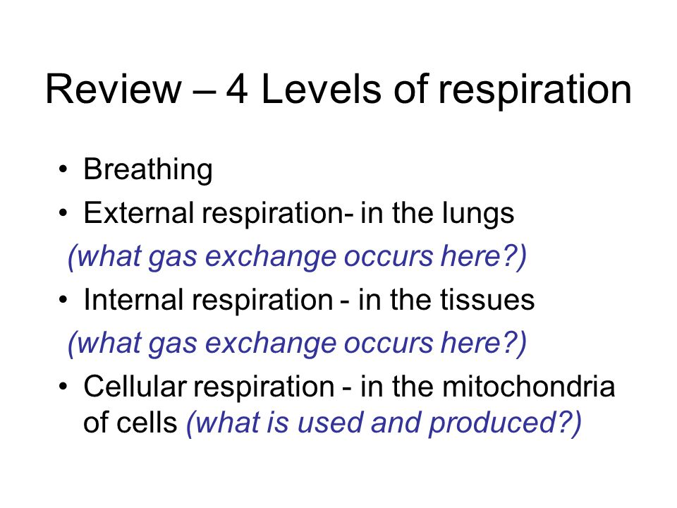 Review – 4 Levels of respiration Breathing External respiration- in the lungs (what gas exchange occurs here ) Internal respiration - in the tissues (what gas exchange occurs here ) Cellular respiration - in the mitochondria of cells (what is used and produced )