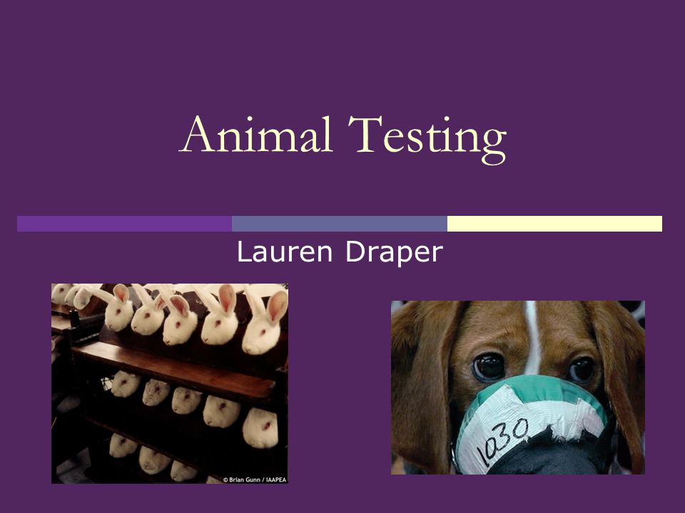thesis statement for being against animal testing Given the stand which you have made, i am against animal abuse, you have a good start for any good essay, you must take a stand that being said, your statement is one which most people would tend to agree with.