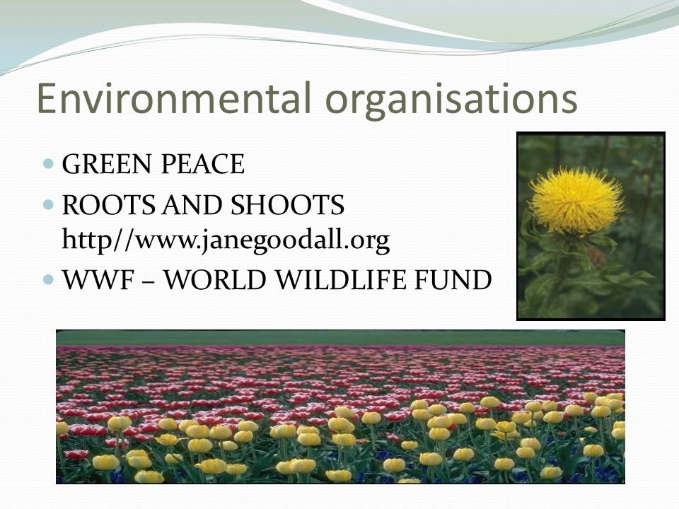 Environmental organisations GREEN PEACE ROOTS AND SHOOTS http//  WWF – WORLD WILDLIFE FUND