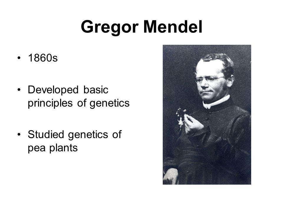 Genetics Travis Mackoy Gregor Mendel 1860s Developed basic – Gregor Mendel Worksheet