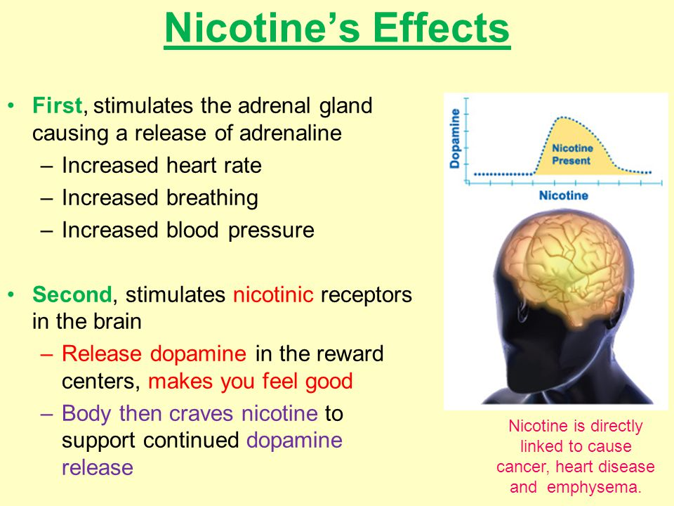 Nicotine's Effects First, stimulates the adrenal gland causing a release of adrenaline –Increased heart rate –Increased breathing –Increased blood pressure Second, stimulates nicotinic receptors in the brain –Release dopamine in the reward centers, makes you feel good –Body then craves nicotine to support continued dopamine release Nicotine is directly linked to cause cancer, heart disease and emphysema.
