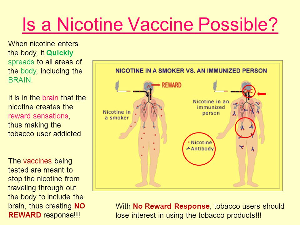 Is a Nicotine Vaccine Possible.