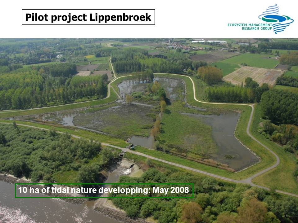 Pilot project Lippenbroek 10 ha of tidal nature developping: May 2008