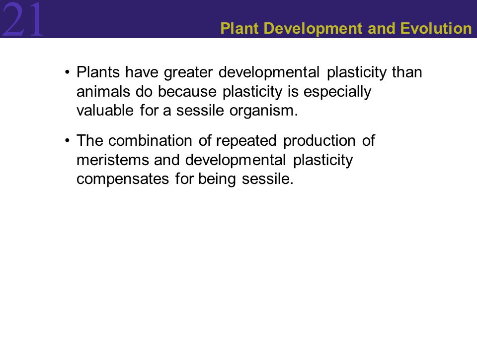 21 Plant Development and Evolution Plants have greater developmental plasticity than animals do because plasticity is especially valuable for a sessile organism.
